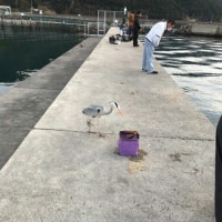 海釣り行きました   \(^_^)/
