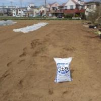 ダイコン畝を耕しました