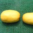 キンショウメロン栽培、試し収穫した