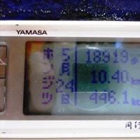 2017.05.25 ヒメオオクワガタ