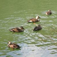 冬鳥の来る池
