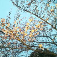 「なばなの里」の春