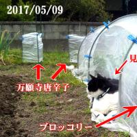 4月5月の畑の話。