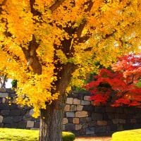 『想いでの紅葉』 北の丸公園