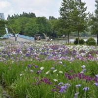 ◎花菖蒲の水元公園    2017.6.14.(水) 曇り/晴れ