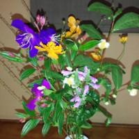 今日咲いている幸國寺の花!