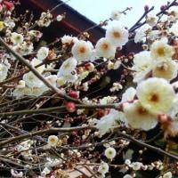 京都・北野天満宮