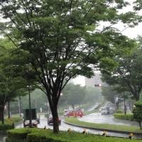 雨降りです
