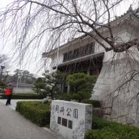 岡崎に行って来ました(岡崎城)。