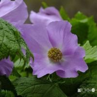 平成29年4月27日(木) 赤城自然園で花見♪