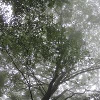 文月二十八日、露草― nostalgic song