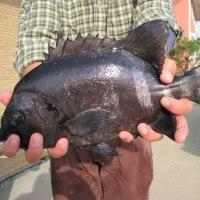 28年11月17日 AM ナイスな釣り日和 PM 型は見れました