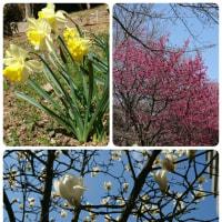 春がやって来た!