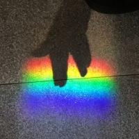 これはびっくり! 虹のトイレ