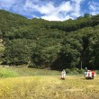 10月16日 おお田の米刈り 2日目