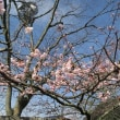 やっと春が来た!