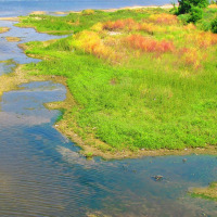 水辺の景観 大和川