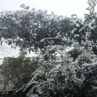 雪の朝            ちょっとビックリ