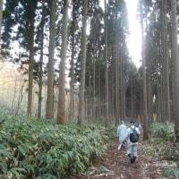 永光寺の森の源流を歩く。(3/26*日)