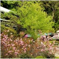 新緑と春の花々、、、