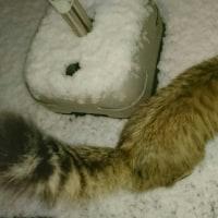 昨日の雪の朝、はしゃぐリリー(^-^)