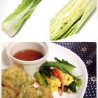 いろいろな白菜😄