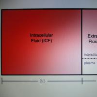 体内における水分分布スペース