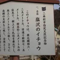 福島県二本松市、塩沢のイチョウです!!