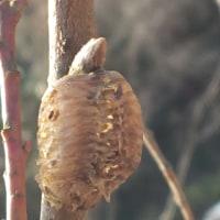 真冬の虫探し