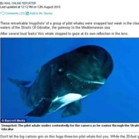 「笑うクジラ」あれこれ