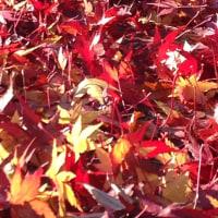 秋のお裾分け
