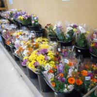 お彼岸用のお花を販売しております