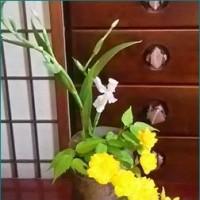 お里帰りの花を眺めながら