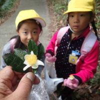 岩本山観察会:お茶の花を見つけました。