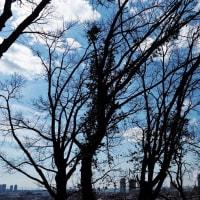 木々の間から町を望む