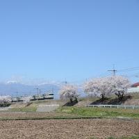 4月23日撮影 その4 みどり湖にて桜と part2