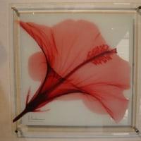 お花のレントゲン写真