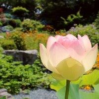掛川市 本勝寺(花の寺)の紫陽花