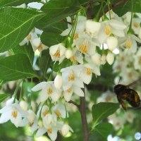 最近見た白い花
