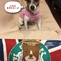 Happy Birthday Merci(≧∇≦)