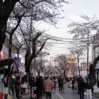 あんこさんの実家近くの桜祭り