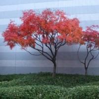 紅葉のアート