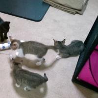 ネコ部屋の様子