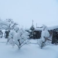 昨夜からの雪