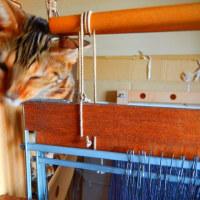 ゆっくりと織り機に向かっています・・猫が