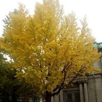 黄色い花?