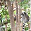 上野動物園を歩き始めました~