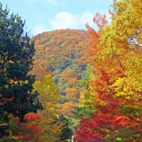 甲山と紅葉の写真