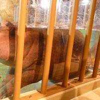 旭山動物園~カバ