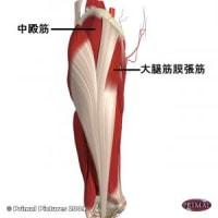 大腿筋膜張筋とつながりが強いツボ